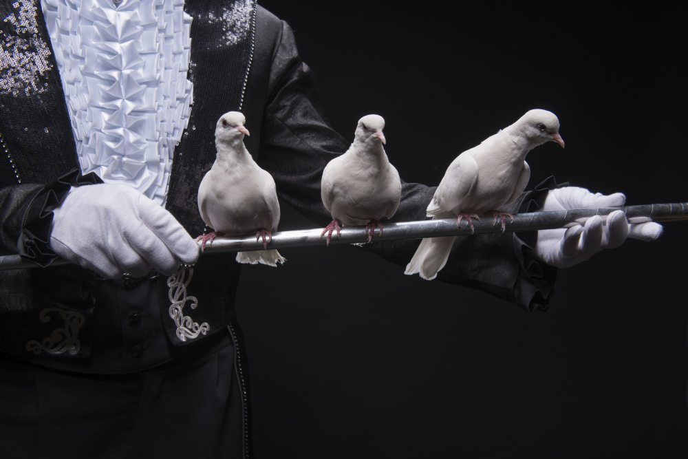 GOP Pigeons Have Lost The Right to Control Congress